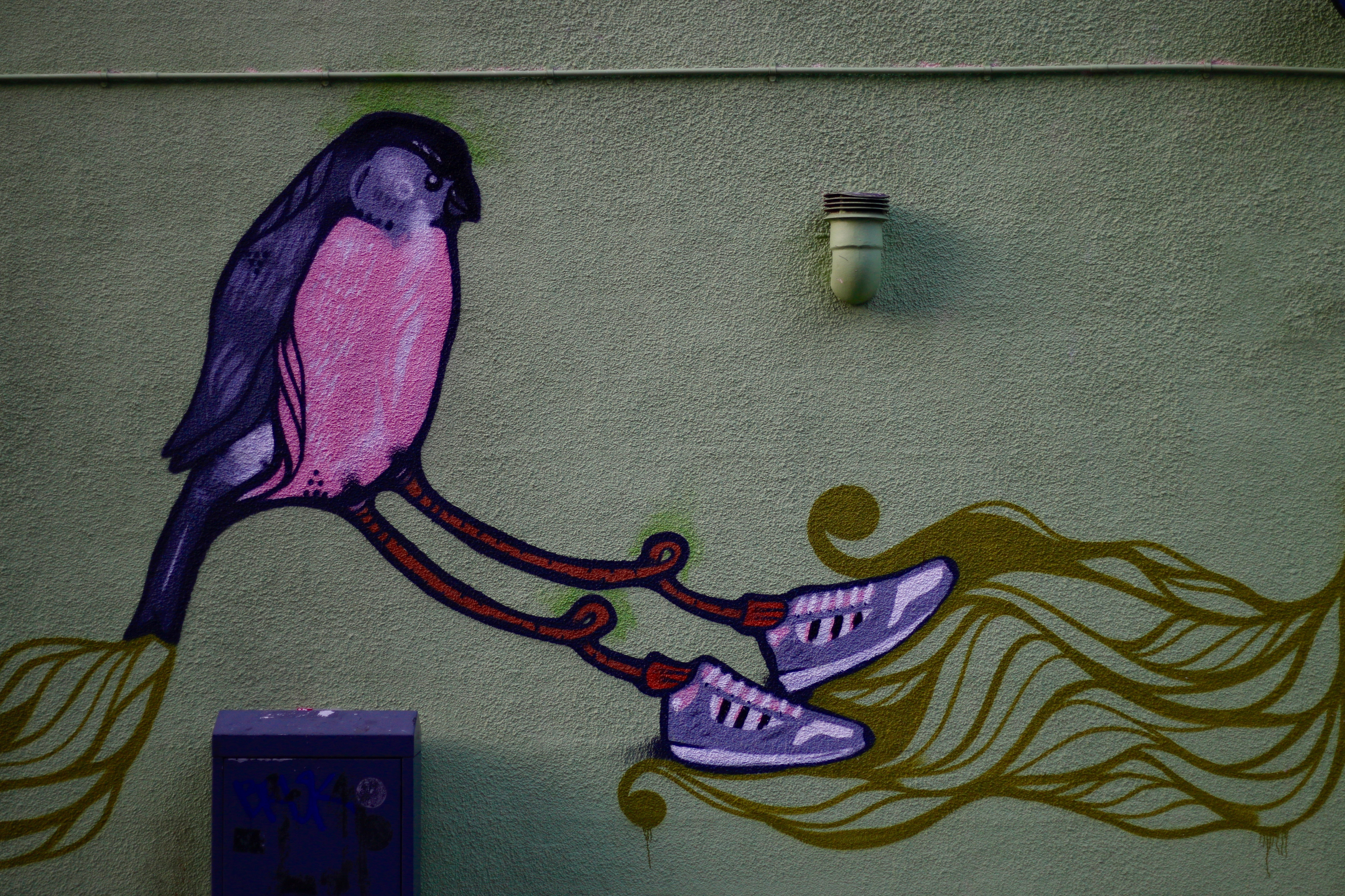 bird with shoes